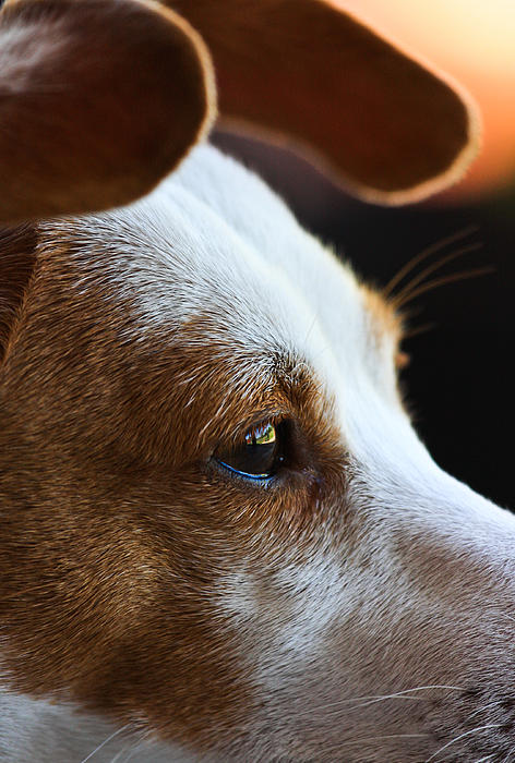 Maggie May Print by Mark Alder