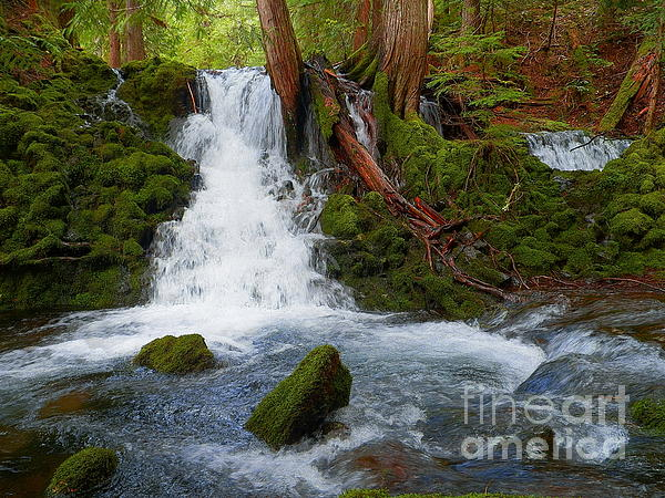 J J - Magic in the Forest - Waterfall Photography