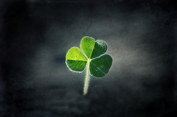 Magical Clover Print by Melanie Lankford Photography