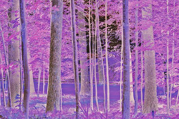 Claudia Mottram - Magical forest