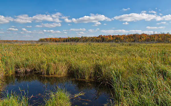 John Bailey - Magnificent Minnesota Marshland