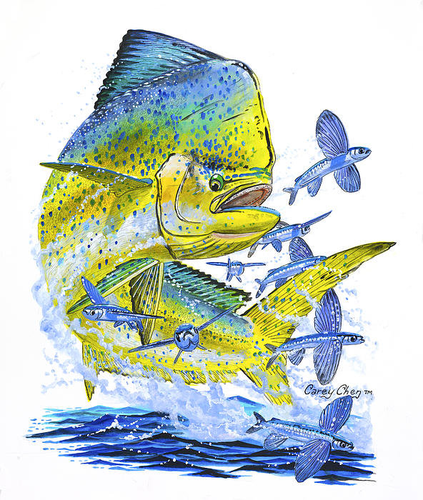 Mahi Mahi Print by Carey Chen