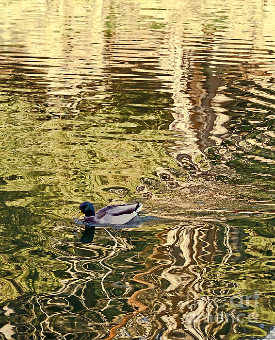 Kate Brown - Mallard Painting