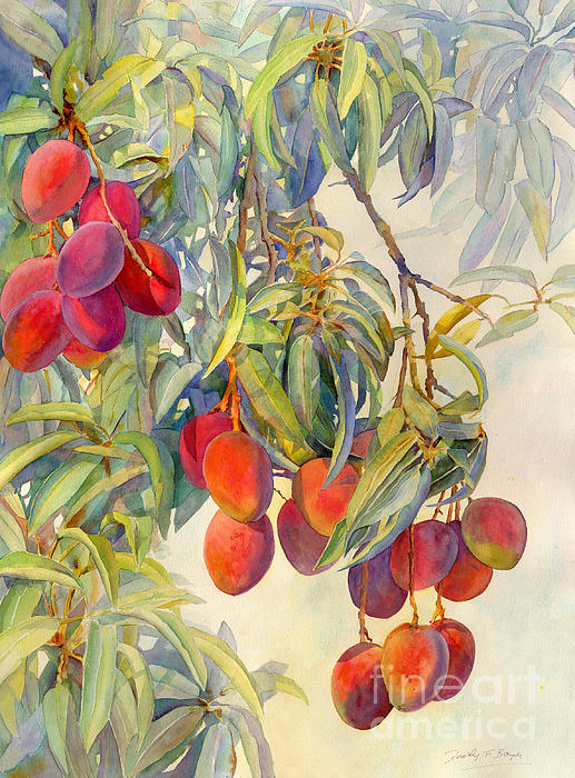 Mangoes In The Evening Light Print by Dorothy Boyer