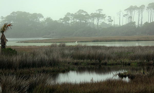 Marsh view at ocean course print by rosanne jordan