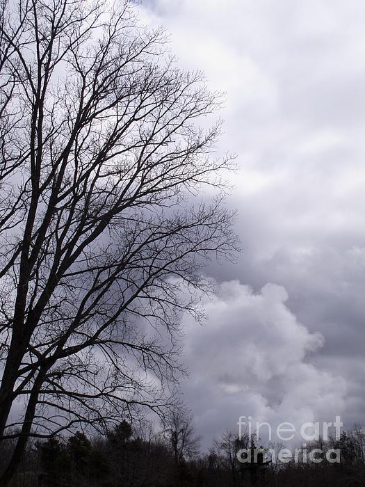 Ann Horn - Masquerading as Cloud