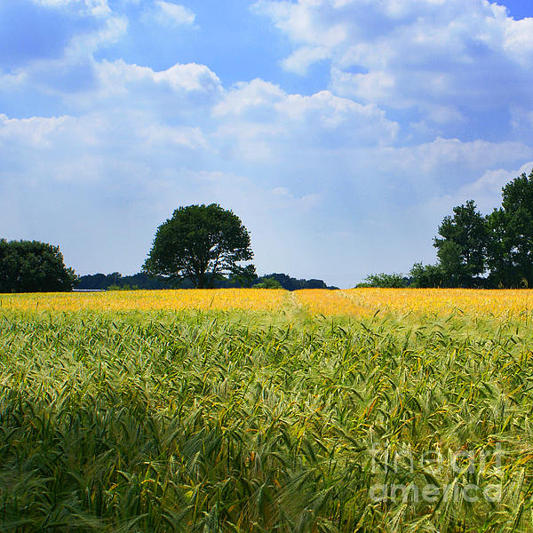 Meadow With Trees Print by George Siedler