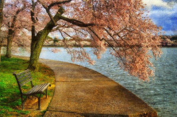 Meet Me At Our Bench Print by Lois Bryan