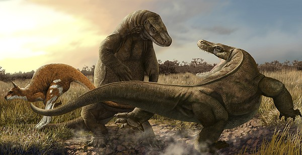 http://images.fineartamerica.com/images-medium-5/megalania-artwork-science-photo-library.jpg