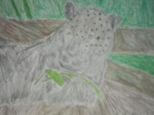 Melanistic Jaguar Drawing On Paper Print by William Sahir House