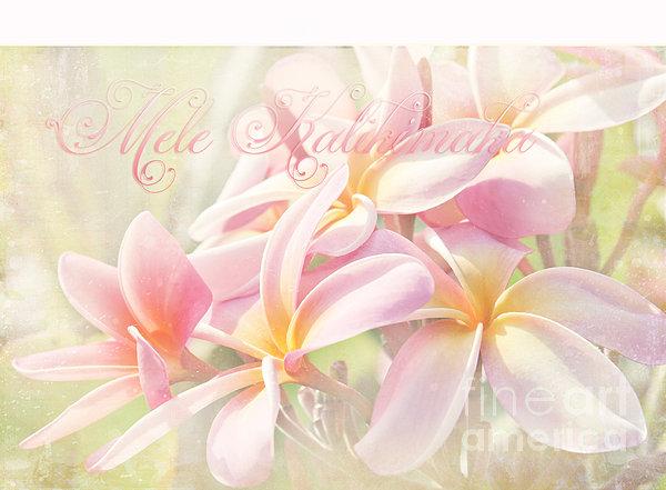 Mele Kalikimaka - Pink Plumeria - Hawaii Print by Sharon Mau