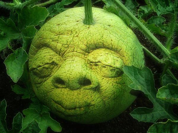 Melon Head Print by Jack Zulli