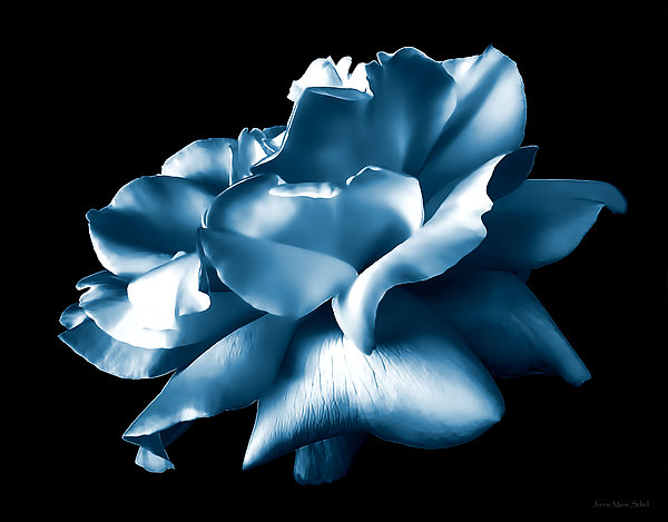 Metallic Blue Rose Flower Print by Jennie Marie Schell