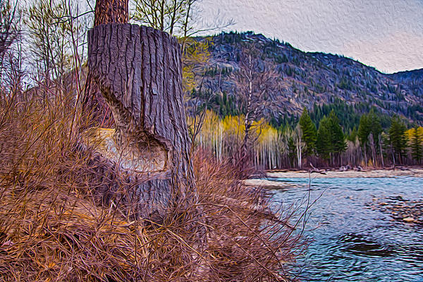 Methow Riverbank Print by Omaste Witkowski