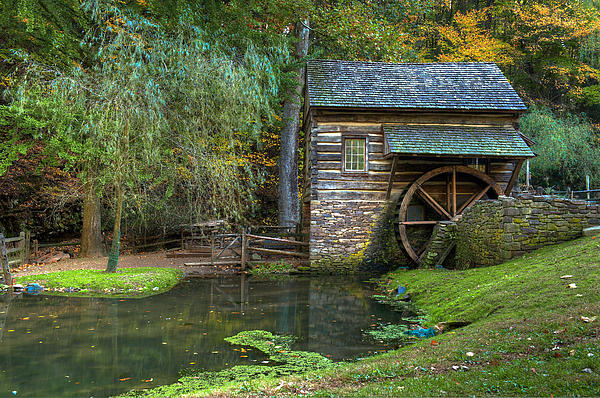 Mill Pond In Woods Print by William Jobes