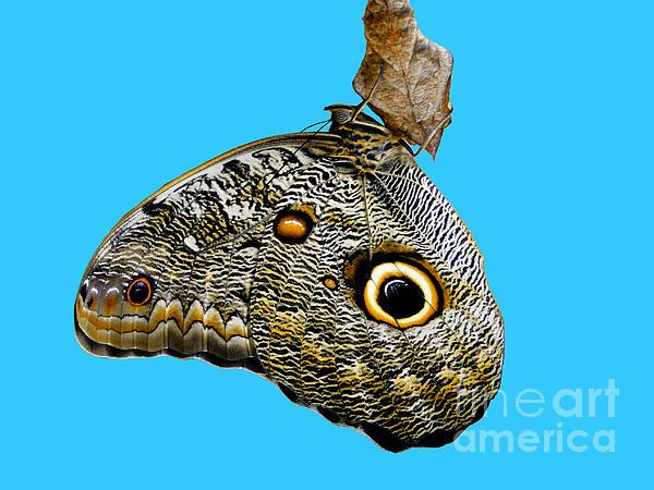 Mindo Butterfly Print by Al Bourassa
