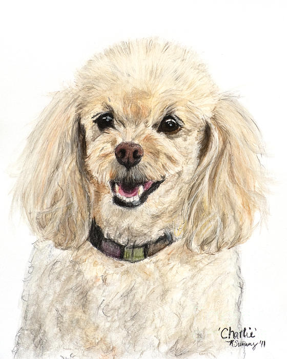 Miniature Poodle Painting Champagne Print by Kate Sumners