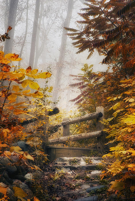 Misty Footbridge Print by Scott Norris