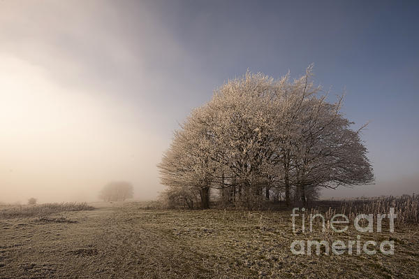 Anne Gilbert - Misty Morn