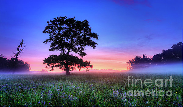Dan Carmichael - Misty Sunrise on the Blue Ridge Parkway I