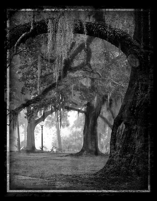 Misty Walk Through The Oak Trees Print by Jeanne  Woods
