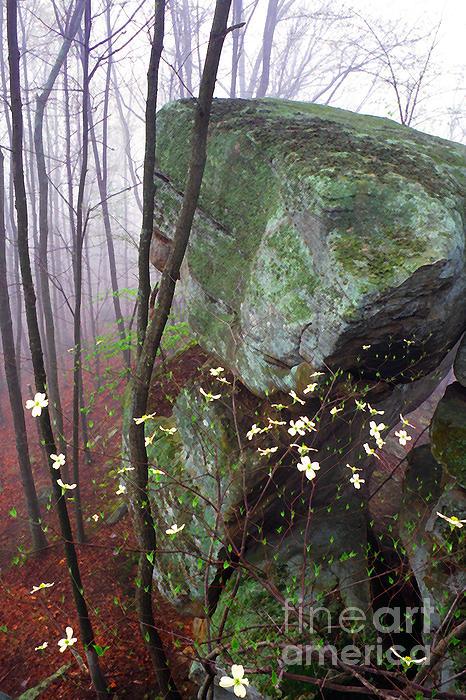 Misty Woods Print by Thomas R Fletcher