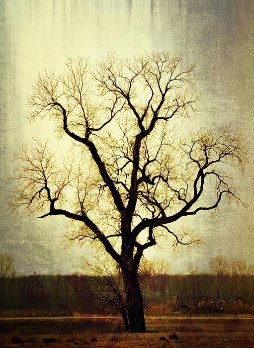 Molted Tree Print by Marty Koch