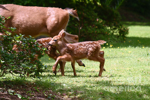 Mommy Is Here Time To Run Print by Kym Backland
