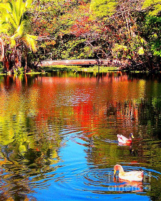 Monet's Garden In Hawaii 2 Print by Jerome Stumphauzer
