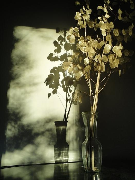 Guy Ricketts - Money Plants Really Do Cast Shadows
