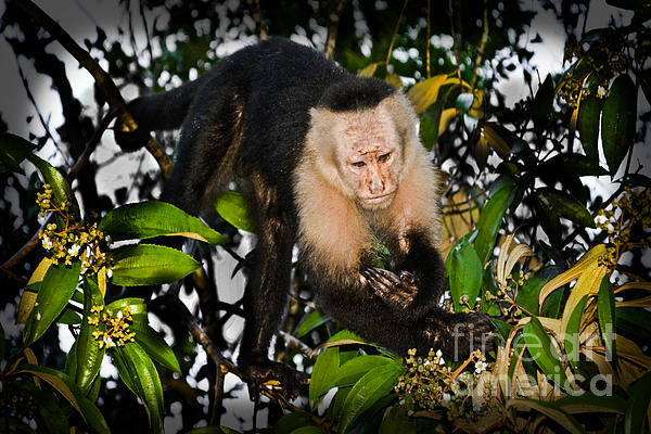 Monkey Business Print by Gary Keesler