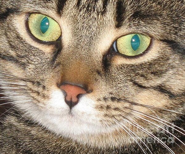 Monty The Cat Print by Jolanta Anna Karolska