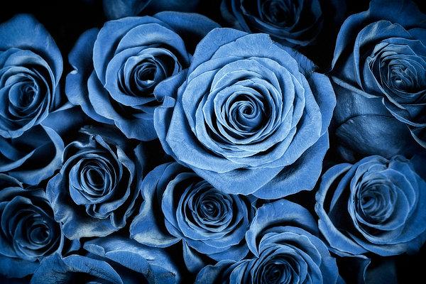 Moody Blue Rose Bouquet Print by Adam Romanowicz