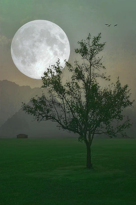 Moonlight On The Plains Print by Tom York Images