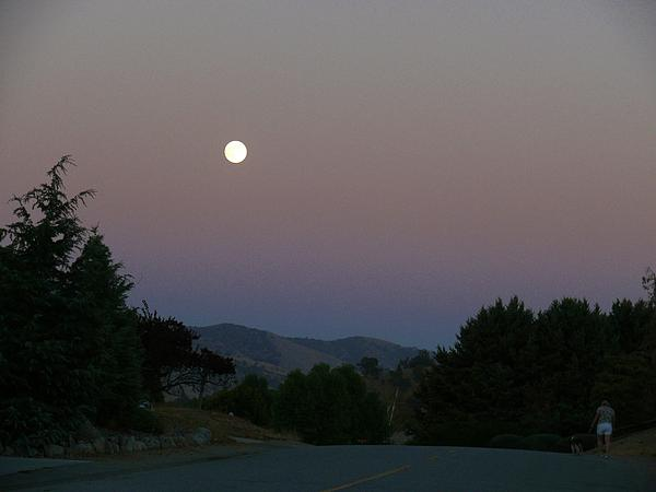 Moonlight Stroll Print by Jacquelyn Roberts