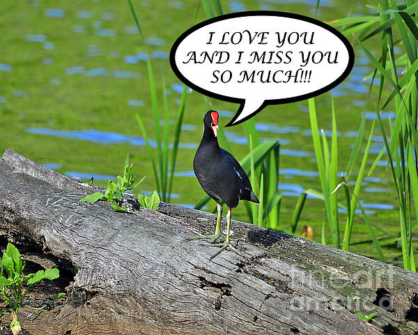 Moorhen Miss You Card Print by Al Powell Photography USA