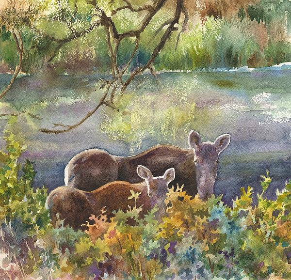 Moose In The Morning Print by Anne Gifford