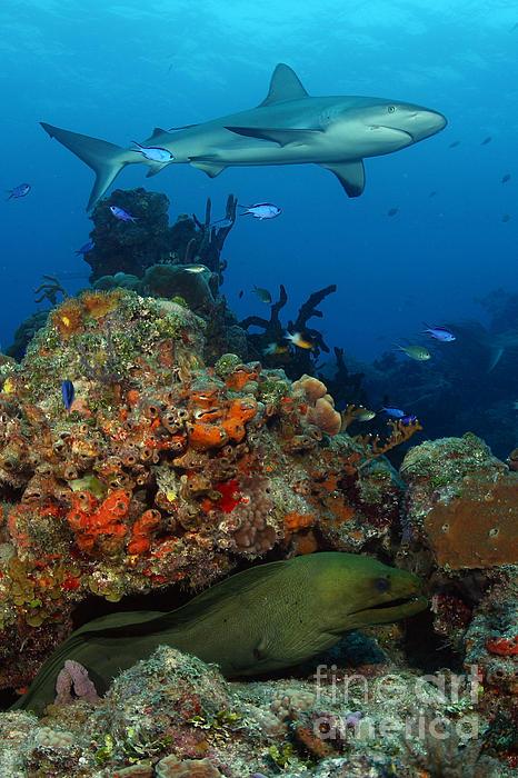 Moray Reef Print by Anna Bennett