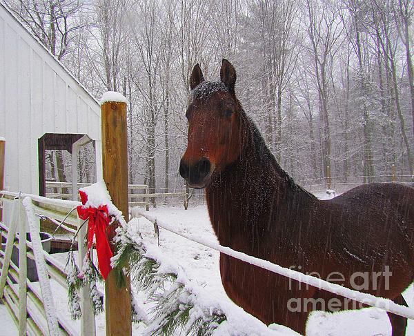 Morgan Horse Christmas Print by Elizabeth Dow