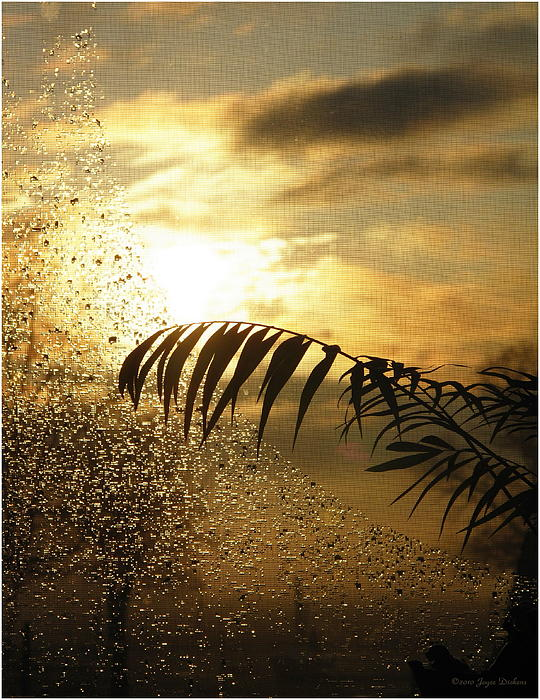 Joyce Dickens - Morning Dew Screen