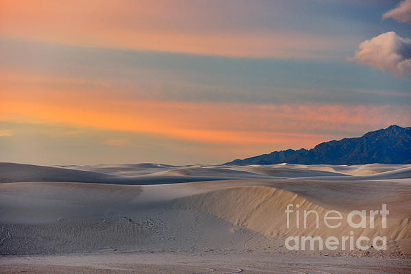 Morning Glory In White Sands Print by Sandra Bronstein