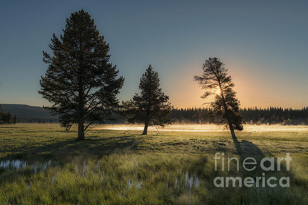 Sandra Bronstein - Morning Light in Yellowstone
