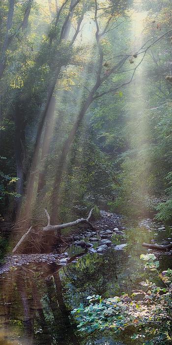 Morning Light Print by Tom Mc Nemar