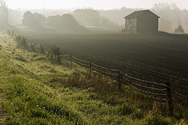 Morning Mist Over Field And Print by Jim Craigmyle