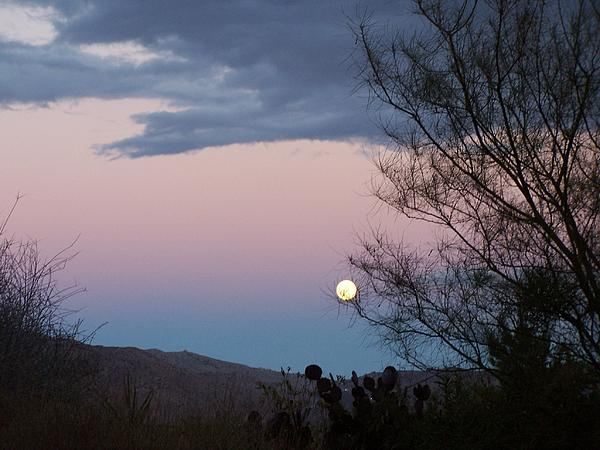 Morning Moon Print by Christine Drake