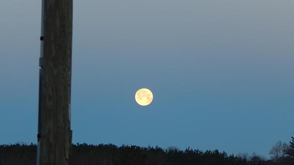 Sandra Underwood - Morning Moon