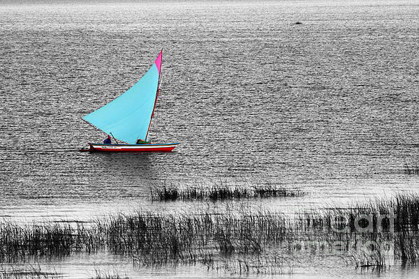 Morning Sail Print by James Brunker