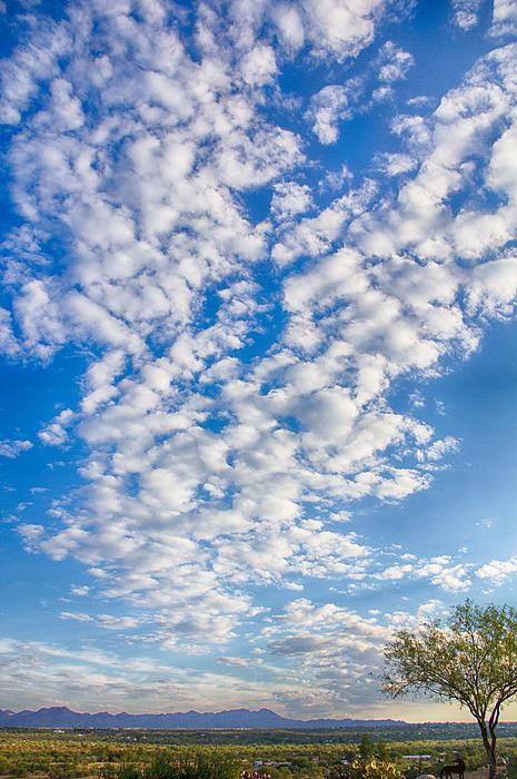 Morning Sky Print by Judi FitzPatrick