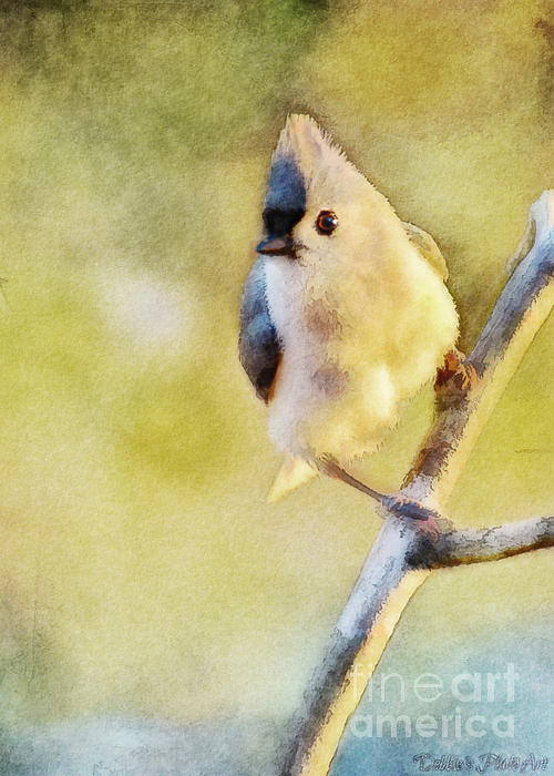 Debbie Portwood - Morning Tufted Titmouse - Digital Paint II with frame