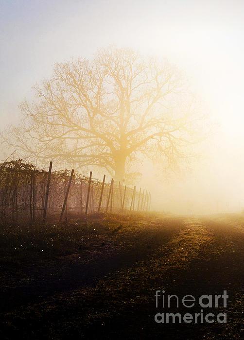 Morning Vineyard Print by Shannon Beck-Coatney